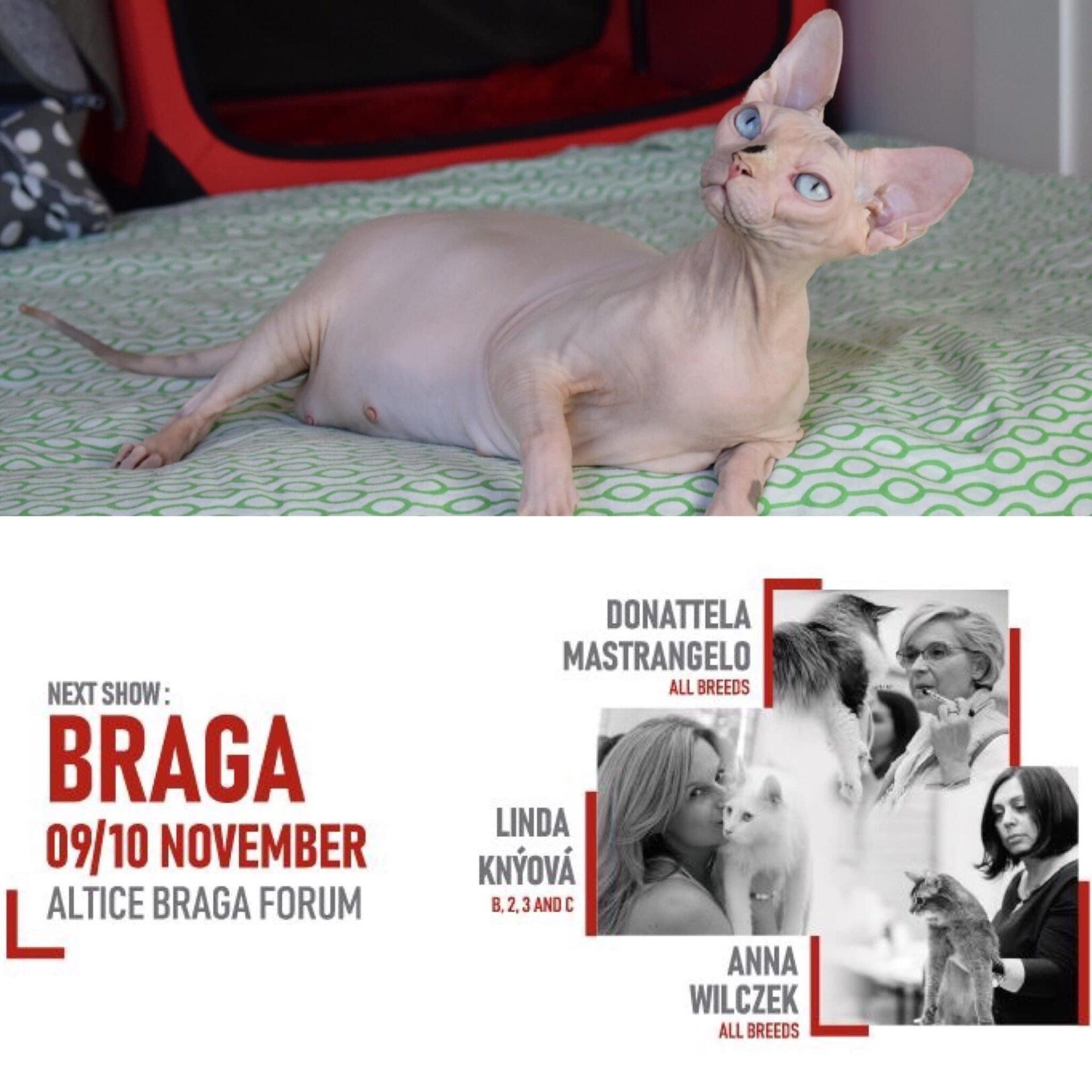 Exposición Internacional Braga 9 y 10 de noviembre 2019